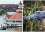 Encuentran cuerpo de niño arrastrado por caimán en Disney