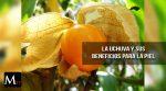 Se descubre que la uchuva contiene beneficios para la piel