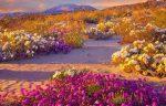 Flores en el desierto