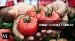Los tomates podrían ser una cura para el cáncer de estómago