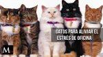 Empresa japonesa usa gatos para combatir el estrés de sus empleados