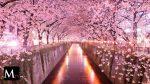Túnel Sakura, Japón