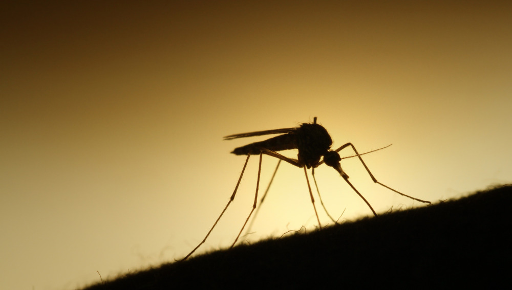 Razones porqué los mosquitos pican a unas personas y no a otras